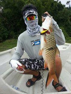 "Pelagic Gear thread featuring a Hampala Barb or better known locally as a ""Sebarau"" - FishingKaki.com"