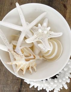 Beautiful - Clean - White Shells and Starfish
