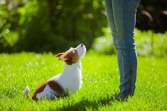 EDUCARE IL CANE AL RICHIAMO - Vi piacerebbe uscire con il cane e lasciare che corra liberamente ma avete paura che scappi? Vi mostreremo 7 trucchi per educare il cane al richiamo.