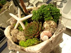 Succulents and Seashells?  I like it!