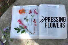Simple Flower Pressing Fun