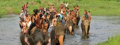 Read traveler reviews for Royal Chitwan National Park Tulsipur, Royal Chitwan National Park timings, Royal Chitwan National Park address, hotels near Royal Chitwan National Park, travel packages, recommendations and photos. To know more pls log on to http://www.justorbit.com/asia/nepal/tulsipur-69154/royal-chitwan-national-park-27364.html