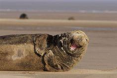 25 animales sonriendo que instantáneamente van a contagiarte su sonrisa