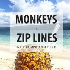 Monkey Jungle is an experience you don't want to miss when visiting the Dominican Republic.