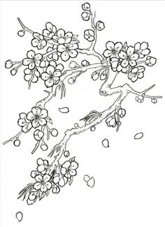 Japanese Cherry Blossom Tree Drawing Sketch Coloring Page Cherry Blossom Drawing, Cherry Blossom Tree, Blossom Trees, Cherry Drawing, Cherry Blossom Outline, Blossom Flower, Japanese Drawings, Japanese Art, Japanese Tattoos