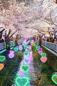 Cherry Blossom Festival South Korea 관광객이 많은 벚꽃길에 하트모양디자인으로 조명을 해놨다 사랑을 하고싶을 정도로 이쁜것같다.
