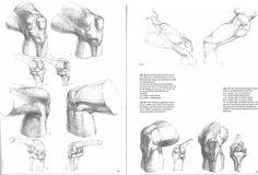 gottfried bammes anatomy - Google Search
