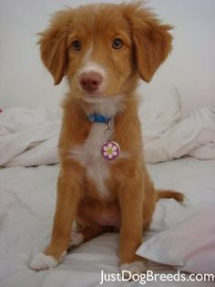 troller dog - Google Search