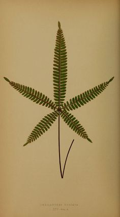 Ferns: British and exotic V.4, 1856-60, Groombridge and Sons