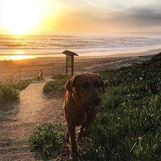 21 Best Manresa State Beach Images California Coast Local Parks