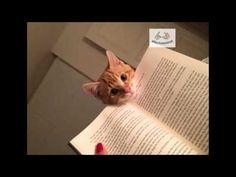 Top 15 Gatos Que Piensan Que Ya Has Leído Suficiente - Afecto Animal. - YouTube