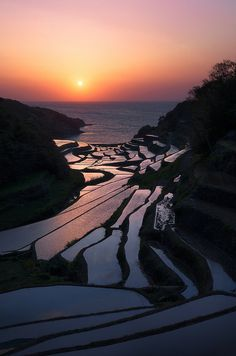 Rice fields at sunset in Saga Prefecture, Japan (by arcreyes).