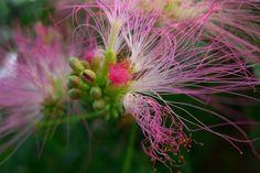 Pink Flower 13x19 In. Print $20.00