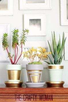 Plain terra cotta pots are given a sleek and modern make over with matte paint and liquid gold leafing. Fast drying and inexpensive!   #mpinterestparty #HomeCrafts #ThinkSpring