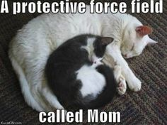 A protective force field