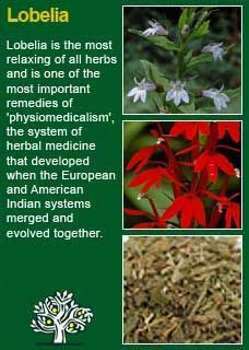 Richard Whelan ~ Medical Herbalist ~ LobeliaIf you want to try lobelia as a home remedy for a mild asthma attack: Mix three parts tincture of lobelia with one part tincture of capsicum (red pepper, cayenne pepper). Take 20 drops of the mixture in water at the start of an asthmatic attack. Repeat every 30 minutes for a total of three or four doses.