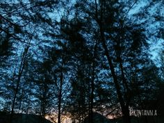 Light in the dusk