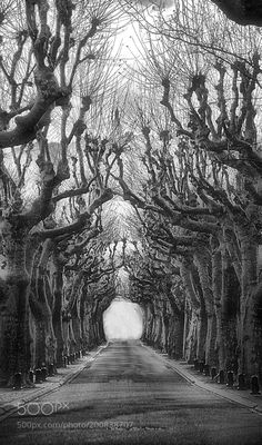 The plane trees opens the door of time by RemsRdp