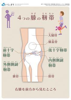 4つの膝の靭帯 #infographics
