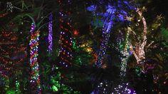 Conservatory, Vancouver, Christmas Tree, Holiday Decor, Home Decor, Teal Christmas Tree, Decoration Home, Room Decor, Xmas Trees