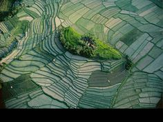 Islet in the terraced rice fields of Bali, Indonesia. Yann Arthus Bertrand Photo Aérienne, Top 10 Destinations, Heritage Site, Travel And Leisure, Cactus Plants, Plant Leaves, Landscape, World, Garden
