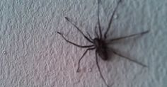 One fairly large sized spider might alarm some people, but what one person films in his house might send some into a panic attack.