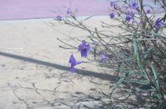 20140930【花與影】 早安,又是個晴朗的早晨。
