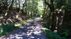 Paisaje ruta de los molinos de San Miguel Sidewalk, Country Roads, San Miguel, Paths, Scenery, Fotografia, Side Walkway, Walkway, Walkways