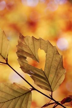 heart of autumn #Love #Heart #Nature    www.facebook.com/EssencetoSuccess