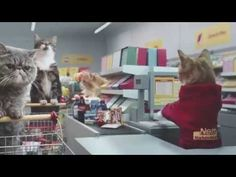 Cats at supermarket Funny commercial shopping cats