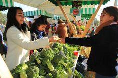 Participan más de 4 mil personas en Mercado de Trueque en el Bosque de San Juan de Aragón