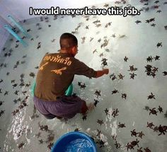 Funny pictures about Working with baby turtles. Oh, and cool pics about Working with baby turtles. Also, Working with baby turtles. Cute Funny Animals, Cute Baby Animals, Funny Cute, Animals And Pets, Hilarious, Super Funny, Wild Animals, Baby Sea Turtles, Cute Turtles