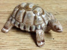 England Mini Turtles, England, Animals, Animales, Animaux, Animal, Animais, English, British