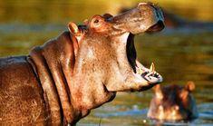 Nairobi National Park Walking Safari Tour : http://www.nairobinationalparktours.com/