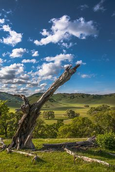 dead tree and clouds above round valley contra costa county, california by Marc Crumpler on flickr