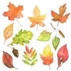 Fall Leaves Drawing, Leaf Drawing, Autumn Illustration, Plant Illustration, Autumn Art, Autumn Leaves, Watercolor Leaves, Watercolor Paintings, Flower Doodles