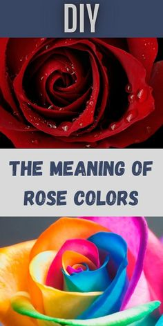 Roses are often thought of as the romance flower, but this isn't actually correct. Roses come in an assortment of different colors, each with different meanings attached to them. #Meaning #Rose #Colors 1 Dollar Shop, Rose Color Meanings, Oscar Fish, Blue Jeep, Korean Eye Makeup, Ankle Jewelry, Bridal Heels, Office 365, Contact Lens