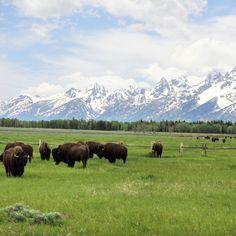 Grand Teton National Park in Jackson, Wyoming