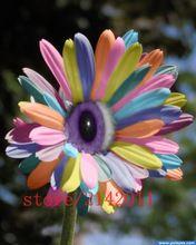 100 rainbow mix unids/bolsa margarita semillas, semillas de crisantemo, semillas de flores raras, crecimiento Natural para el jardín de plantación(China (Mainland))
