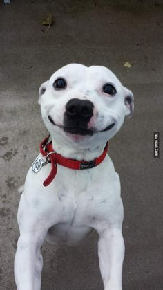 The sweetest of smiles - 9GAG