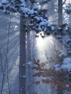 Michigan forest in winter