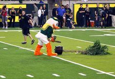 Oregon Lumberjacks #OregonVsStanford #HackTheTree #WTD #GoDucks
