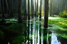 glowist: salemstoned: looks like the forest from princess mononoke it does! so pretty wow All Nature, Nature Tree, Green Nature, The Last Airbender, Photos, Pictures, Beautiful Places, Scenery, Pixel Art