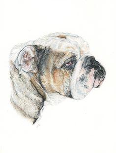 Bulldog Inglés. English Bulldog. Illustration pencil. Ilustración lápiz. Dog portrait Bulldog Drawing, Bulldog Images, Creative Inspiration, Sleep, Illustration, Drawings, Drawing Ideas, Artwork, Dogs