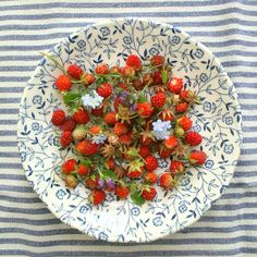 Nest Decoration & Designs by Tamar > Tiny strawberries Nutrition Tips, Health And Nutrition, Health Tips, Sour Foods, Strawberry Patch, Wild Strawberries, Food Displays, Healthy Treats, Healthy Foods