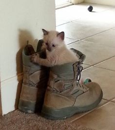 rescue baby kitten rescued from storm under tree shoes
