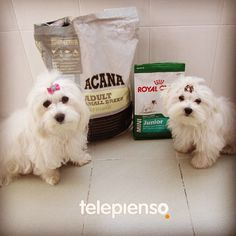 http://www.telepienso.com/products/acana-adult-small-breed  http://www.telepienso.com/products/royal-canin-mini-junior