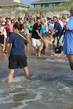 Releasing Lea the loggerhead with a satellite tag