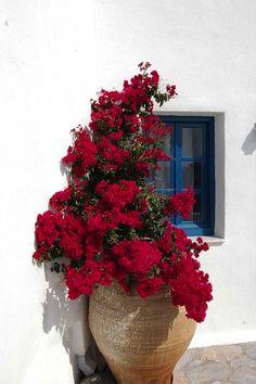 flower, red,