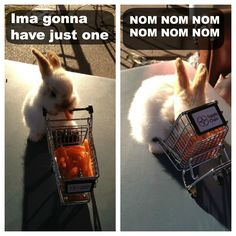 Why you should never let a bunny shop for carrots.